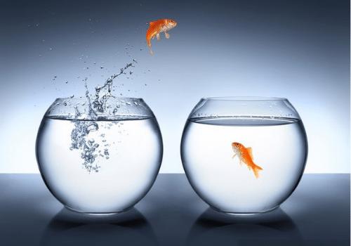 Risolvere problemi come un pesce salta da una vasca all'altra
